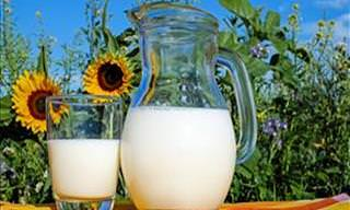 Benefícios e Perigos de Beber Leite de Vaca