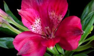 O belíssimo ciclo de vida das flores em câmera lenta!