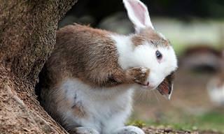 Como resistir a esses adoráveis coelhinhos?