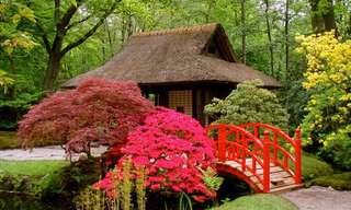 A Serena Beleza dos Jardins Japoneses!