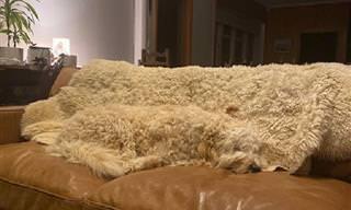 A intrigante arte da camuflagem