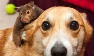 Animais podem ser muito afetuosos!