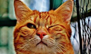 Os gatos mandões atacam novamente!