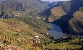 Você já viu as belezas dos vinhedos de Porto, em Portugal?