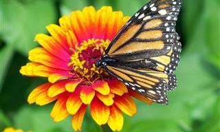 45 Frases Bonitas e Sábias Sobre a Natureza
