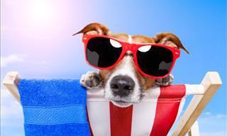 É esse o resultado quando cachorros vão à praia...