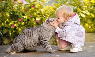 Hilário: Estes animais não querem ser beijados!