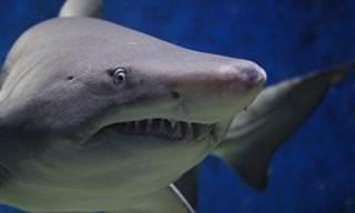 Aprenda sobre uma das criaturas mais antigas do planeta