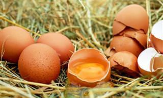 Conheça agora os benefícios que o ovo trará à sua saúde