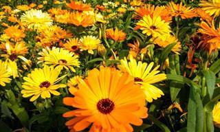 10 Plantas Que Agem Como Inseticidas Naturais!