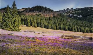 Toda a Beleza da Primavera nos Campos da Polônia