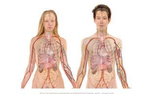 Hora do Teste: Você Conhece o Seu Próprio Corpo?