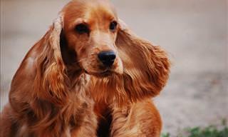 Concurso de Beleza Animal em 18 Fotos
