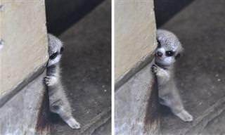 Animais tímidos e fofos em ternas imagens