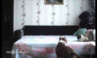 Hilário: Quando o dono sai, o cachorro apronta uma festa!