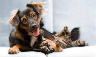 20 Cães e Gatos Que Vão Encantar o Seu Coração!