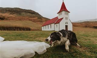 14 fotos engraçadas de casamento com cães adoráveis