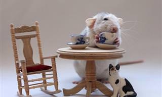 Esses Ratinhos Adoráveis Vão Te Encantar!