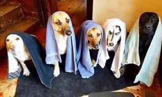 Fotos Que Mostram Como é Ter Uma Comunidade Canina Em Casa