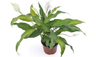 10 Plantas Que Purificam o Ambiente da Sua Casa