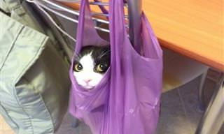 15 Fotos Hilárias de Gatos Para Alegrar Seu Dia