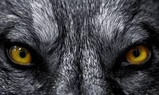 Hora do Teste: Você é Capaz de Adivinhar o Animal Apenas Pelos Olhos?