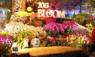 O Festival das Orquídeas de Taiwan