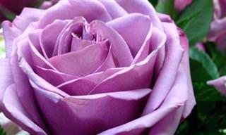 As Coloridas Rosas e Seus Significados