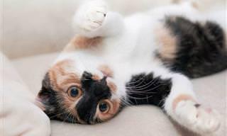As 5 Personalidades Mais Comuns em Gatos Domésticos