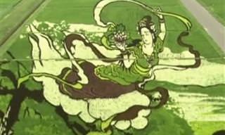 Plantações de arroz no Japão viram obras de arte!