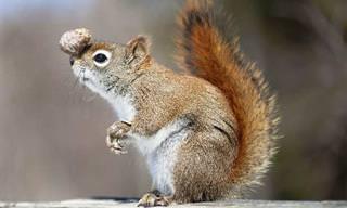 Divirta-se e Encante-se Com Esses Lindos Esquilos!