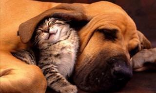 20 Cães e Gatos Fofos Que São os Melhores Amigos!