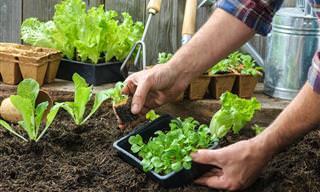 7 Artigos Sobre Jardinagem