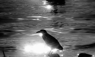Paisagens fluminenses em imagens poéticas