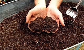 6 Passos Simples Para Fazer Um Composto Para Plantas