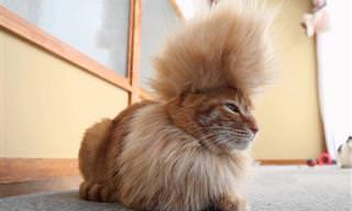 Animais Com Penteados Incrivelmente na Moda!