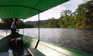 Há Tanta Vida na Floresta Amazônica!