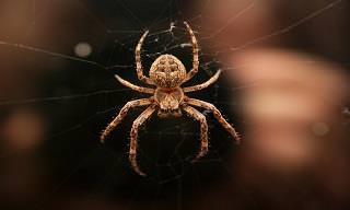 Evite a Visita de Aranhas Com Produtos Naturais