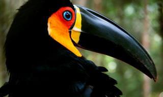 10 Animais Brasileiros Que Correm Risco de Extinção