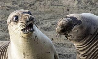 As Fotos de Animais Mais Engraçadas do Mundo