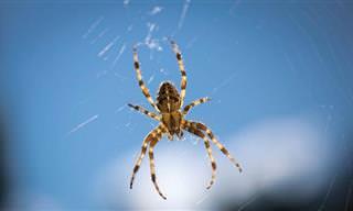 Espante Aranhas Da Sua Casa Com Essas 9 Ótimas Dicas
