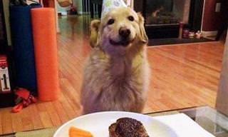 Esses Cães Vão Colocar um Sorriso no Seu Rosto!