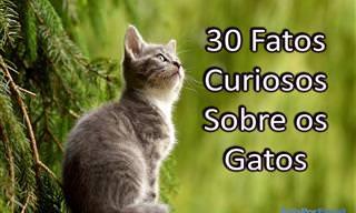 30 Fatos Curiosos Sobre os Gatos