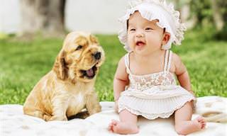 Bebês Rindo de Cachorros