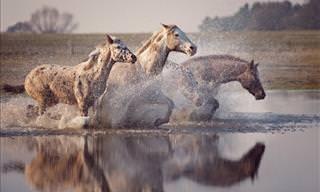 Lindas Fotografias de Cavalos Selvagens da Fotógrafa Wiebke Haas