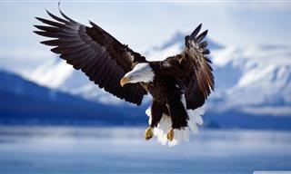Fotos e Fatos Interessantes Sobre as Águias