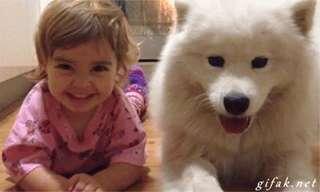 Esses Animais Sabem o Segredo da Felicidade!