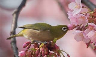Detalhes Maravilhosos da Natureza do Japão