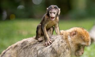 Que Animal Você Vê Primeiro?