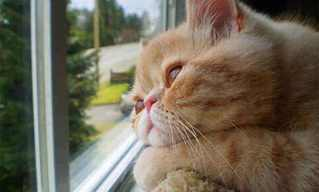 30 Gatinhos Saudosos, Esperando na Janela